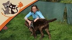 Beruf Hundetrainer - Vermittler zwischen Mensch und Tier