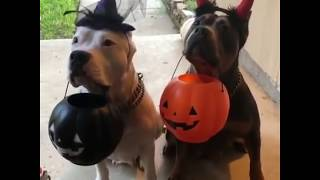 Cute/Funny Animal videos Pt 1