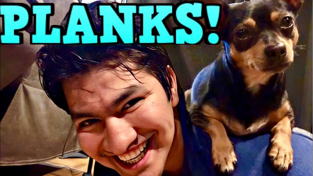 Doing Planks With Rocky & Luna! - ChiPin Miniature Pinscher (Chihuahua Mix Dogs)