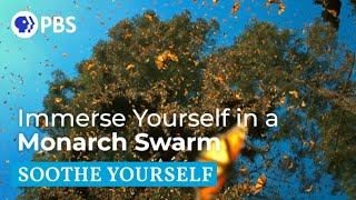 Immerse Yourself in a Monarch Swarm