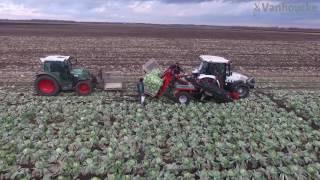 Koolrooier versmarkt - Arracheuse de chou frais - Cabbage harvester for storage