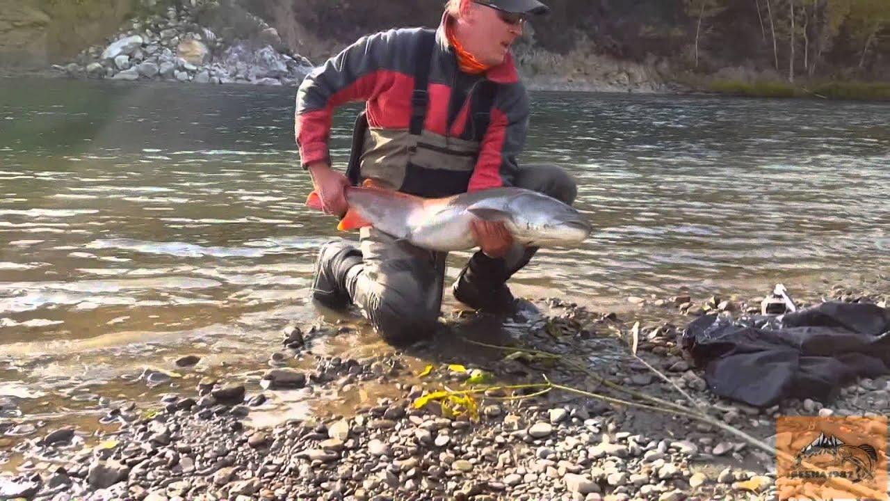 Крупный таймень, рыбалка на Алтае. Поймал тайменя на спининг и отпустил испытав кайф! Блесна Mepps