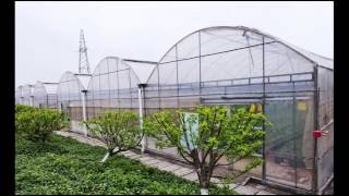 Organic Gardening Tips - How to Grow Vegetables at Home; Organic Vegetable Farming
