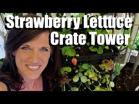 How to Make a Strawberry Lettuce Crate Tower, Growing Vertically//Small Space Garden Series #4 - 동영상