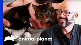 Jackson Galaxy Makes A Massive Difference In the Lives Of These Cats | My Cat From Hell