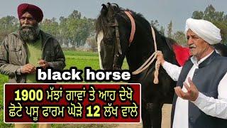 #Lakshyadairy part-4 #blackhorse   ਵੇਖੋ ਜਾਟ ਦੇ ਠਾਠ  # pushkarmela   PiTiC Live