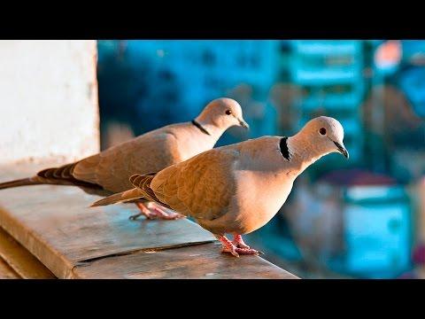 Вопрос: Какой отличительный признак птиц?