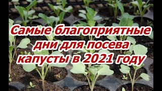 КОГДА СЕЯТЬ КАПУСТУ В 2021 ГОДУ? Не спешить сеять слишком рано! Посев по лунному календарю!