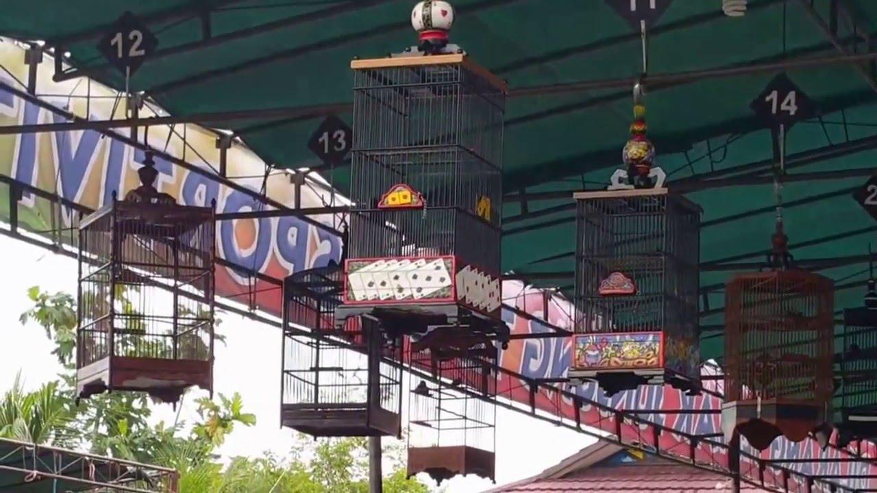 Burung Kolibri Road To Presiden Cup Iv Pontianak Kalbar Youtube