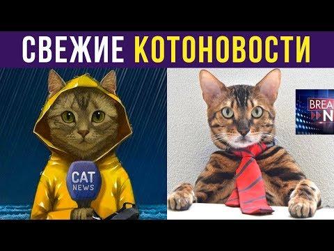 Приколы с котами. Свежие КОТОНОВОСТИ   Мемозг #246