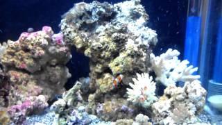 10 gallon micro reef day 13-1/1
