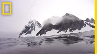 Explore the Antarctic From the Back of a Minke Whale | National Geographic