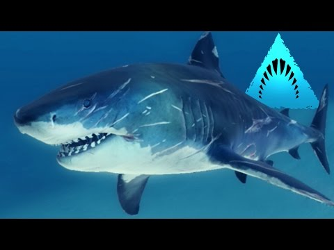 TIGER SHARK! - Man Eater! - Depth | Ep4 HD