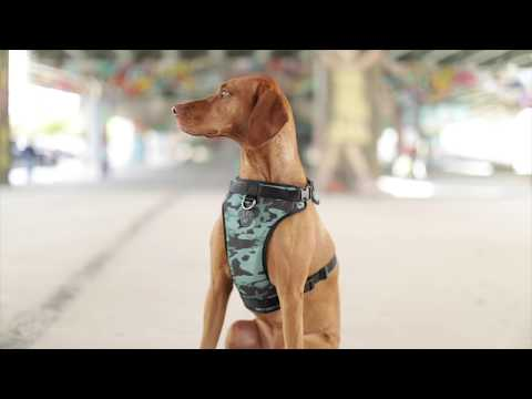 The No-Pull Harness By Canada Pooch