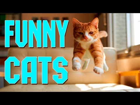 Funny Cats Compilation April 2016 – Funny Cats 2016 – Funny Cat Videos