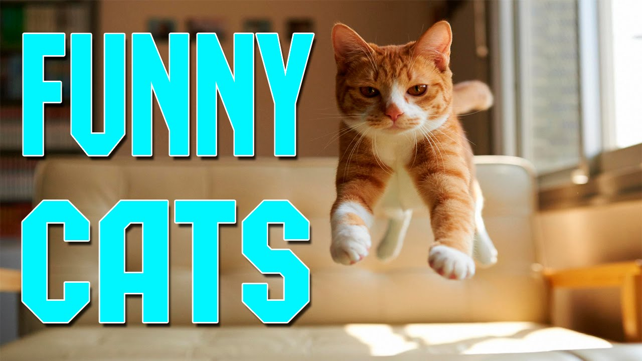 Funny Cats pilation April 2016 Funny Cats 2016 Funny Cat