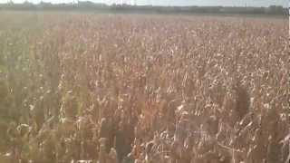 Video Kombajniranje kukuruza 2012 download MP3, 3GP, MP4, WEBM, AVI, FLV Juli 2018