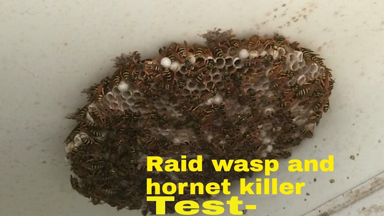 wasp nest spray - 1280×720