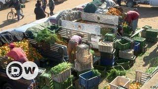 Çiftçilere iklim değişikliğine karşı sigorta - DW Türkçe