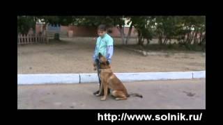 ребенок и собака от Сольника.avi(Девочка Валя (9 лет) показывает чему научила свою собачку. Собака - бельгийская овчарка с питомника