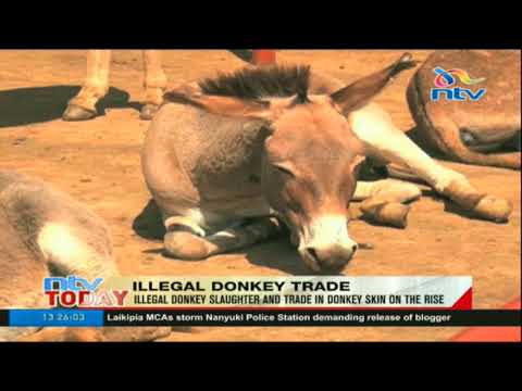 Illegal donkey slaughter and trade in donkey skin on the rise