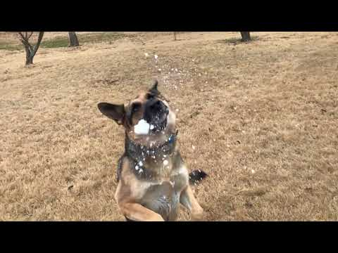 Odin Catches Snow in Slow-motion