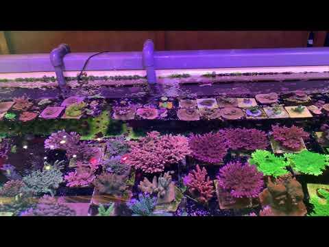 Zu Besuch Bei Fauna Marin GmbH - Spezialunternehmen Für Meerwasser Aquaristik Und Korallen