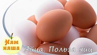 Яйца. Польза яиц. Как готовить яйца