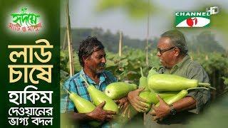 লাউ চাষে হাকিম দেওয়ানের ভাগ্য বদল   Shykh Seraj   Channel i   Bottle Gourd  