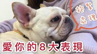 這是狗狗愛你的「8大表現」 快看看你家的汪星人有多愛你!