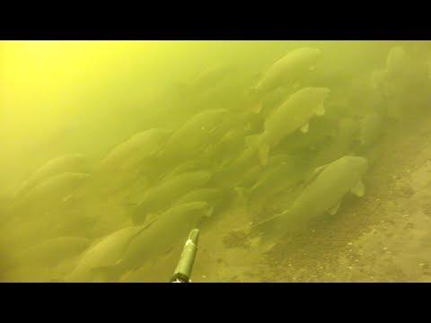 рыбалка охота сазан
