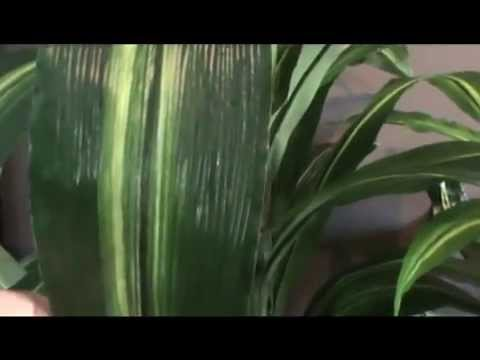 Plantas artificiales venta youtube for Plantas ornamentales artificiales