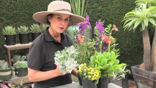 Small Plants For Small Spaces With Dalia Brunner