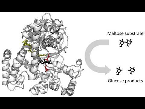 enzymes-|-wikipedia-audio-article