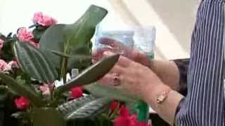 Смотреть видео цветы на балконе что делать во время отпуска
