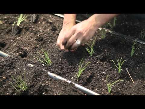 BROOKLYN FARMER (Official Trailer)
