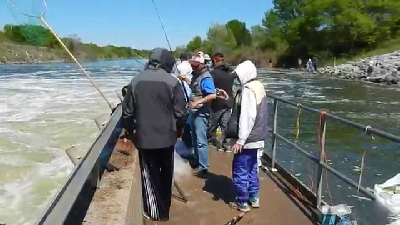 spider web fishing lake somerville dam youtube