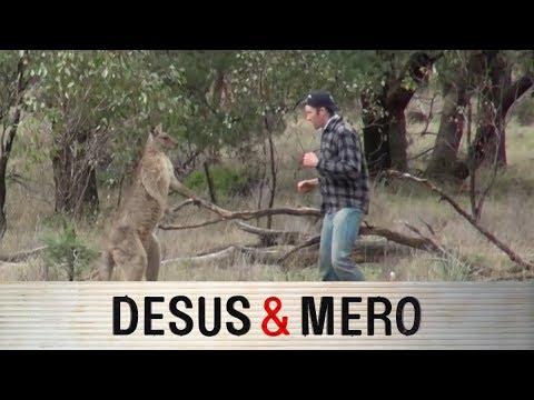 Kangaroo Beef