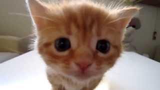 Котенок отчаянно мяукает