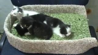 Родились четверо котяток малышей.