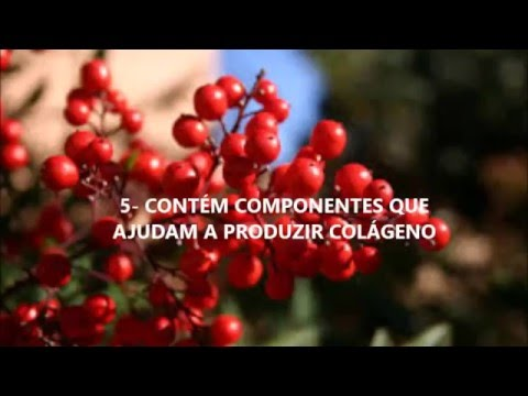 CONHEÇA 10 BENEFICIOS DO CRANBERRY