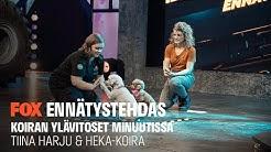 ENNÄTYSTEHDAS I Tiina Harju & Heka-koira I Koiran ylävitoset minuutissa I FOX Suomi