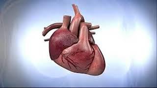El Corazón un Órgano Maravilloso - Fraternidad Rosacruz de Max Heindel -