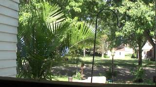 The View From My Couch (Majesty Palm Tree) - Tropical Plants in Minnesota
