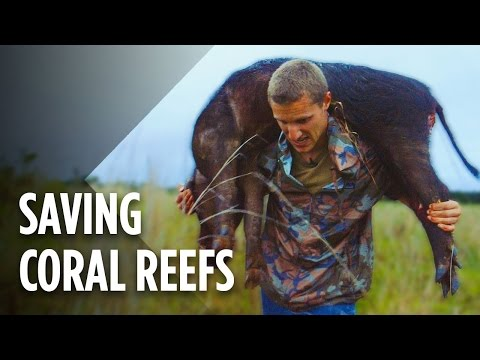 hunting-wild-pigs-could-save-hawaii's-coral-reefs