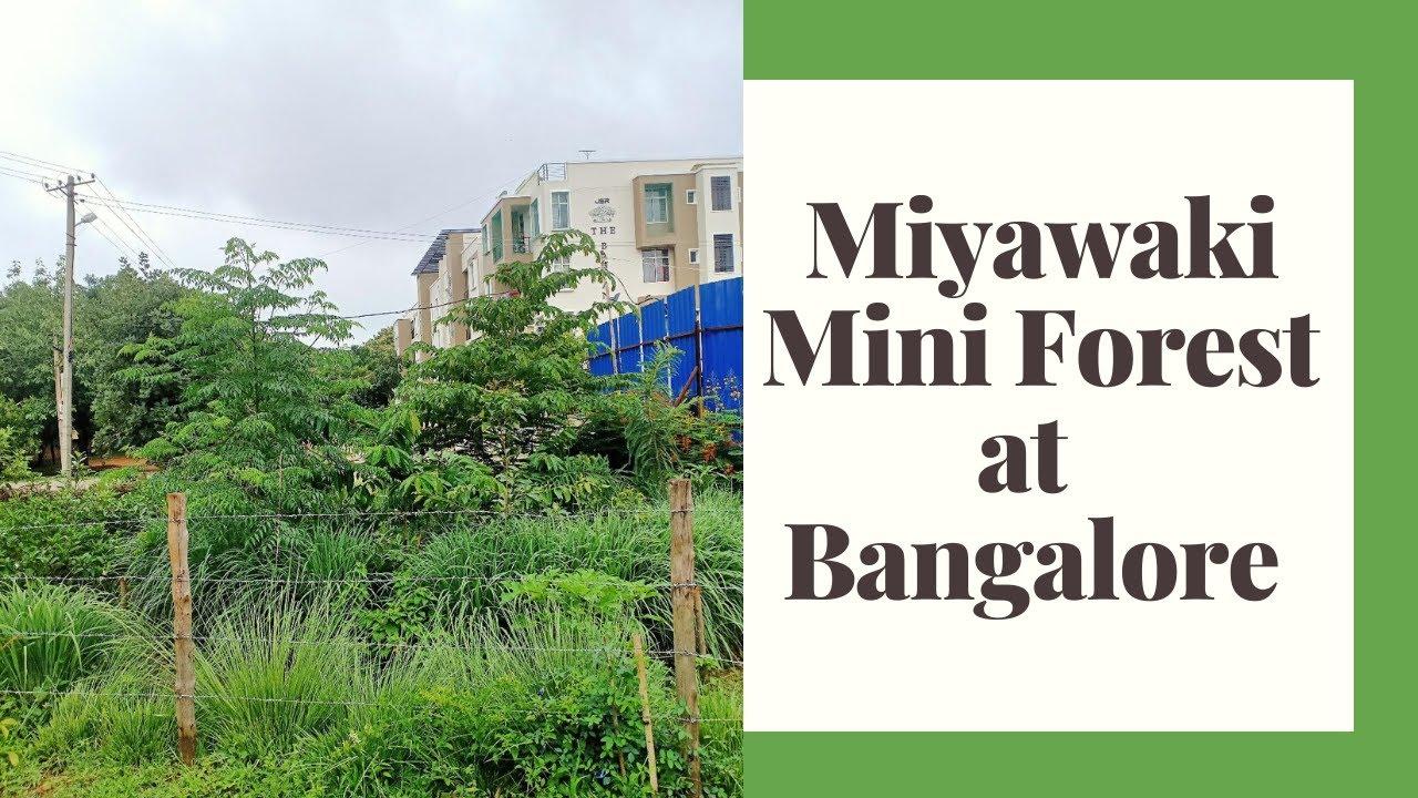 Execution with 2 project examples. Miyawaki Mini Forest At Bangalore June 2020 Youtube