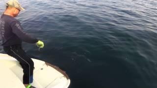 Рыбалка на акул Владивосток Элефант
