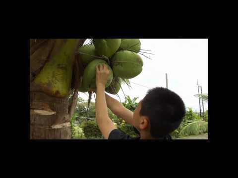 Buddy tries to be coconut man