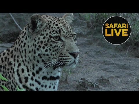 safariLIVE - Sunrise Safari - December 29, 2018