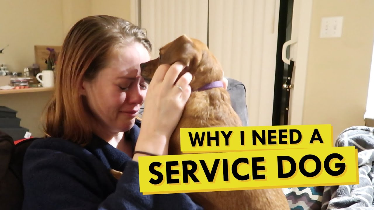 Should I Train Chloe to Be a Psychiatric Service Dog?
